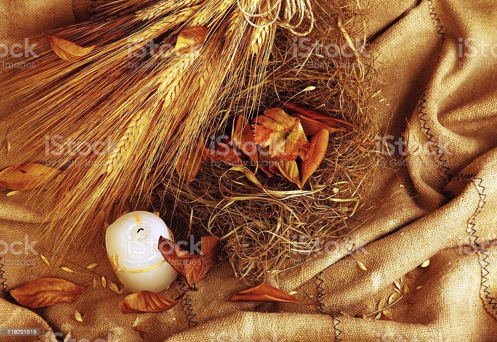 Autumn wheat background royalty-free stock photo