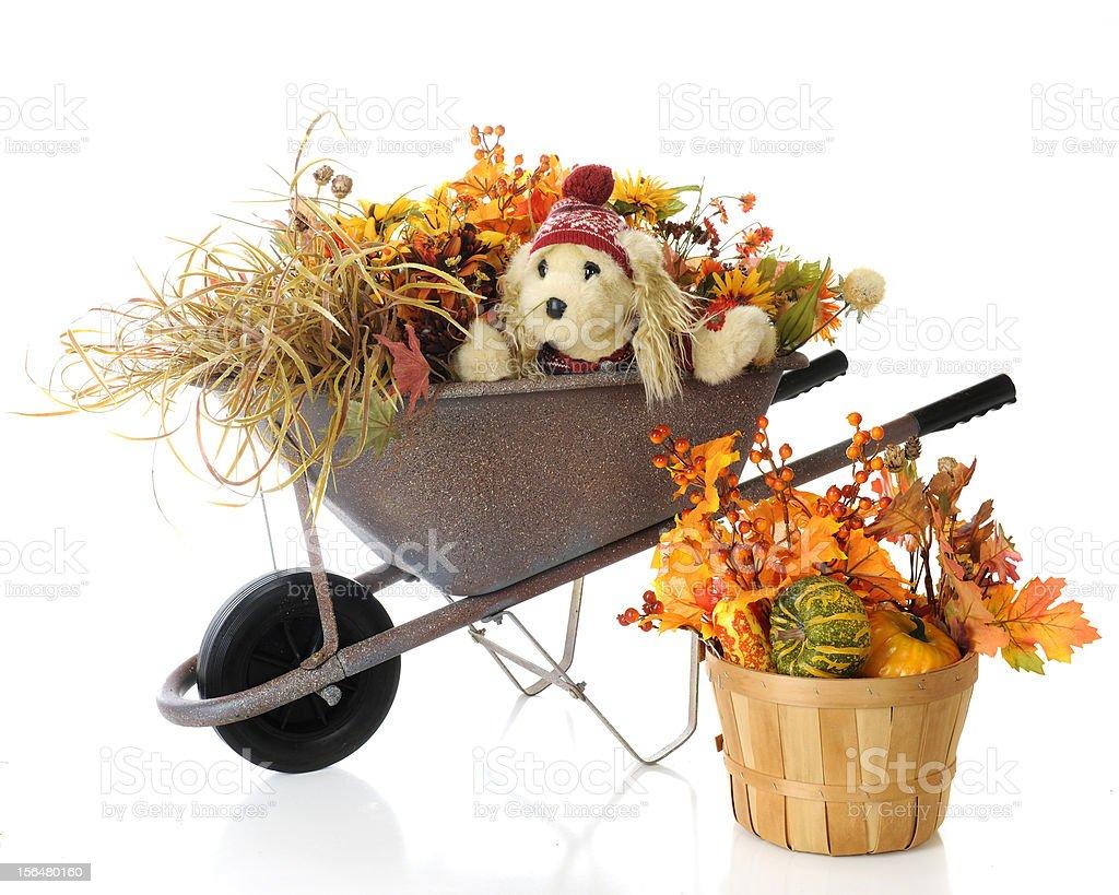 Autumn Wheelbarrow Pup royalty-free stock photo