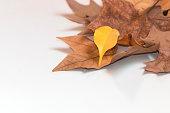 秋のホワイトの背景に鮮やかなリーブズ