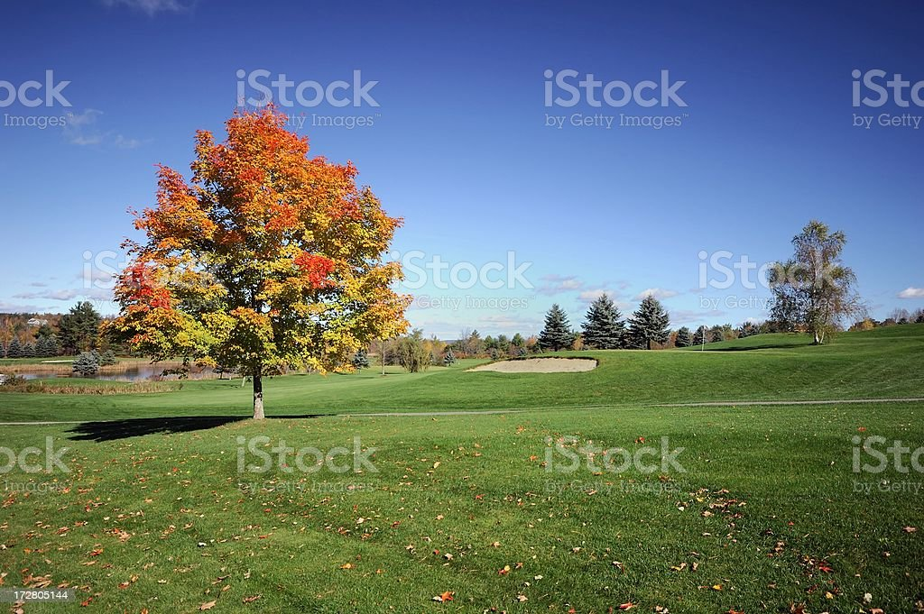 Autumn wide angle royalty-free stock photo