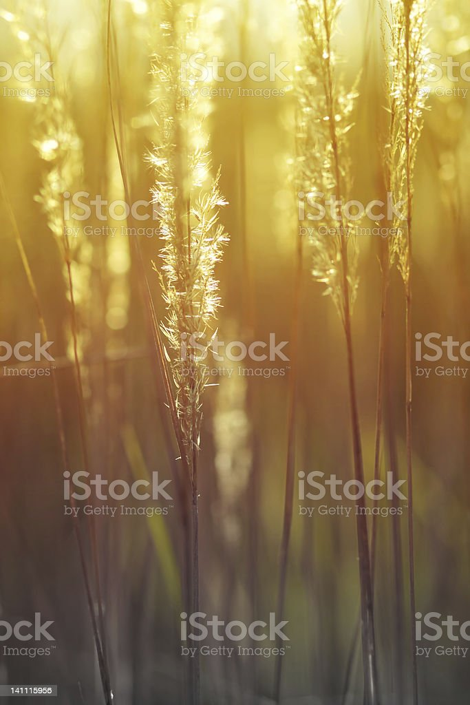 Autumn wild flowers royalty-free stock photo