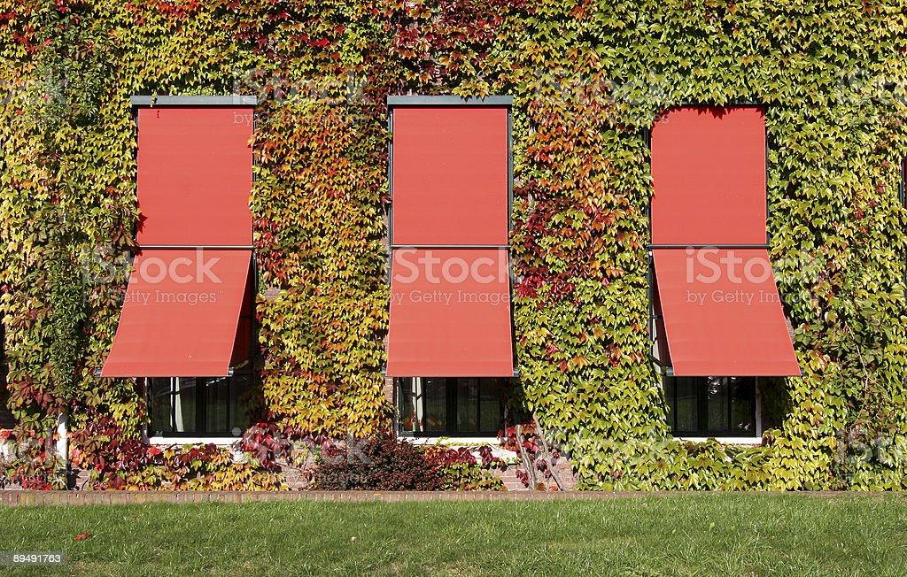 Autumn Windows royalty-free stock photo