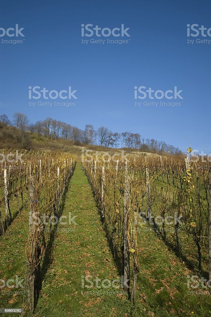 Autumn Wine Series royalty-free stock photo