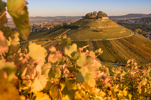 Autumn with vineyards over ruins of castle on volcan near Heilbronn Germany