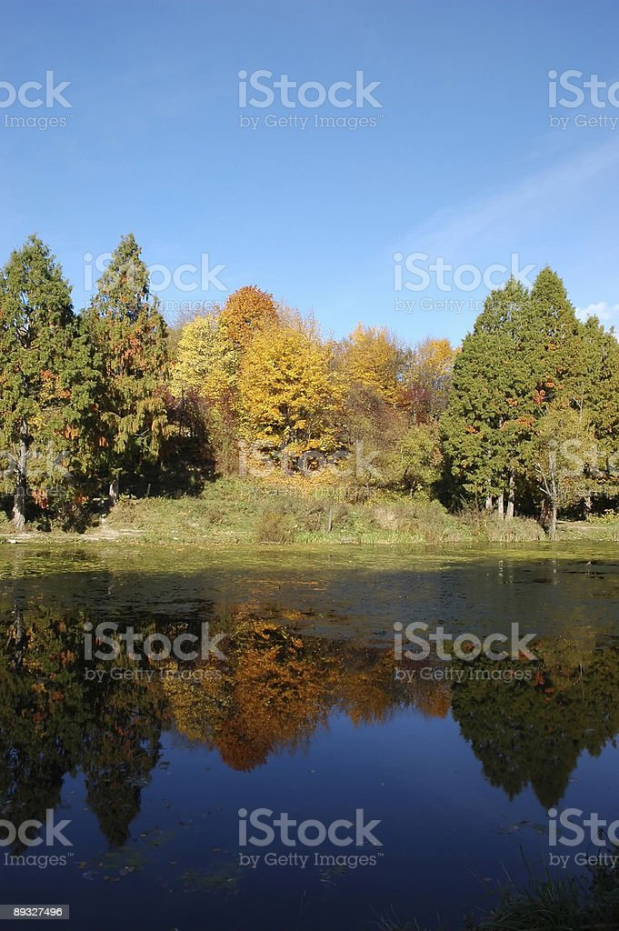 Autumn wood and his reflection in water royalty-free stock photo
