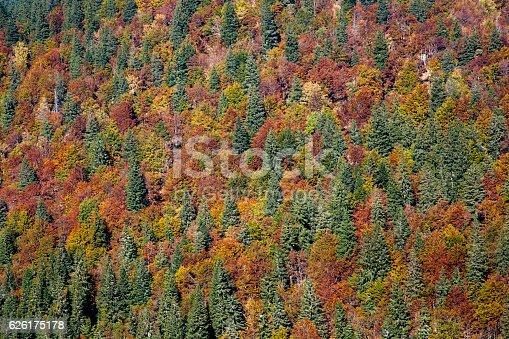 istock Autumn woodland background 626175178