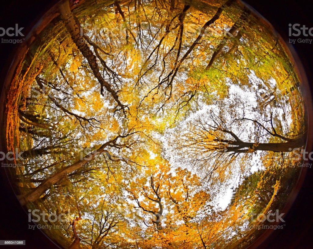 Autumn Woodland Canopy stock photo