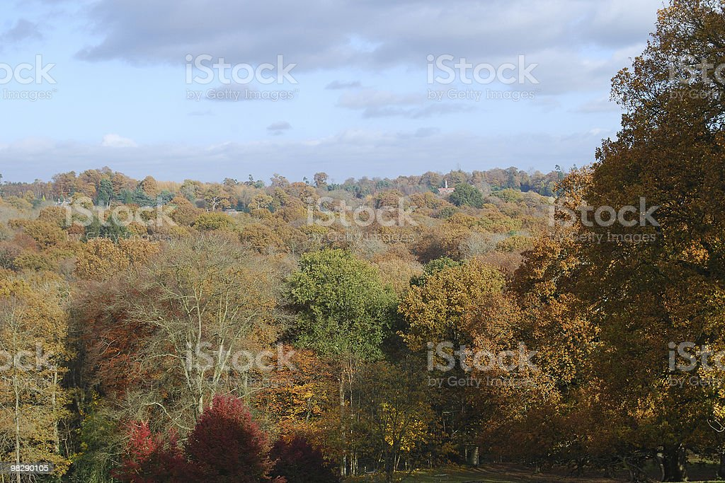 Bosco autunnale nel West Sussex, Inghilterra foto stock royalty-free