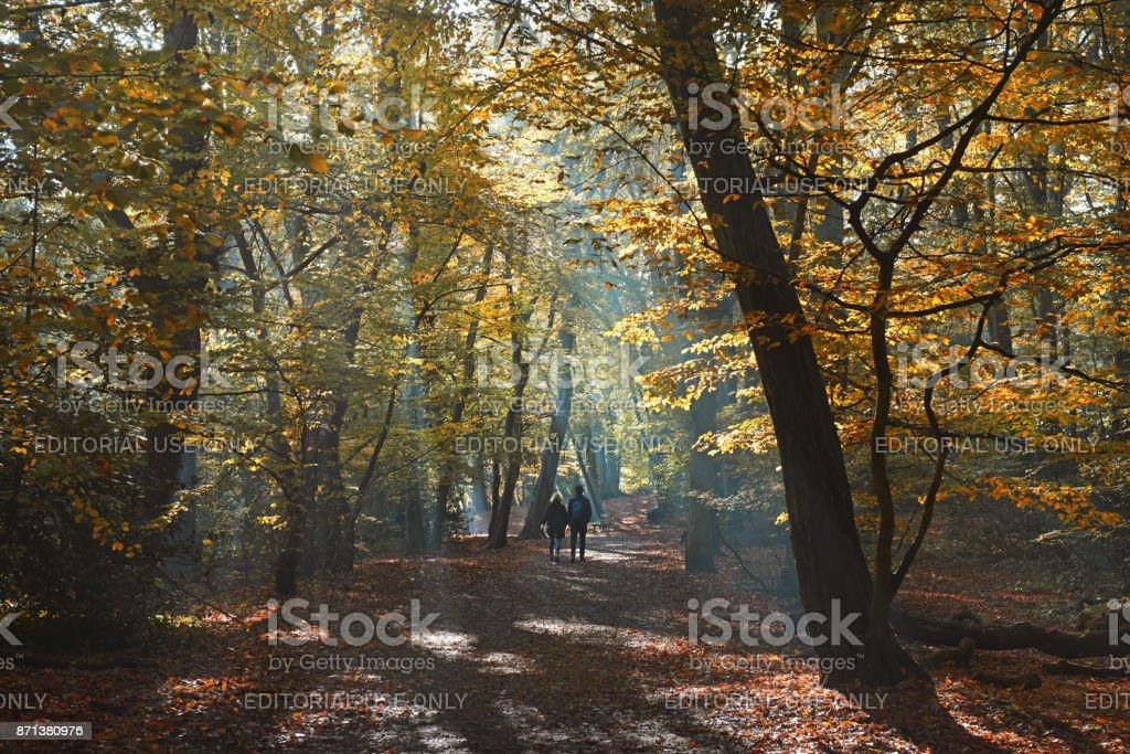 Autumn woodland path stock photo