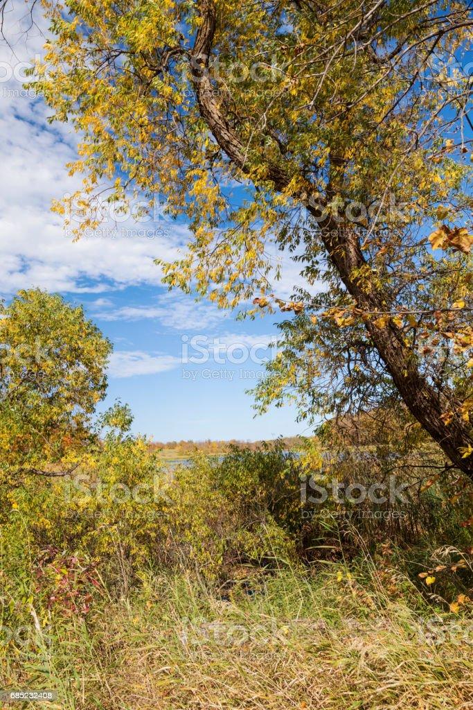 Autumn Woodland royalty-free stock photo