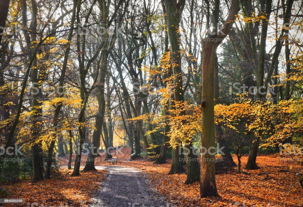 Autumn Woodland stock photo