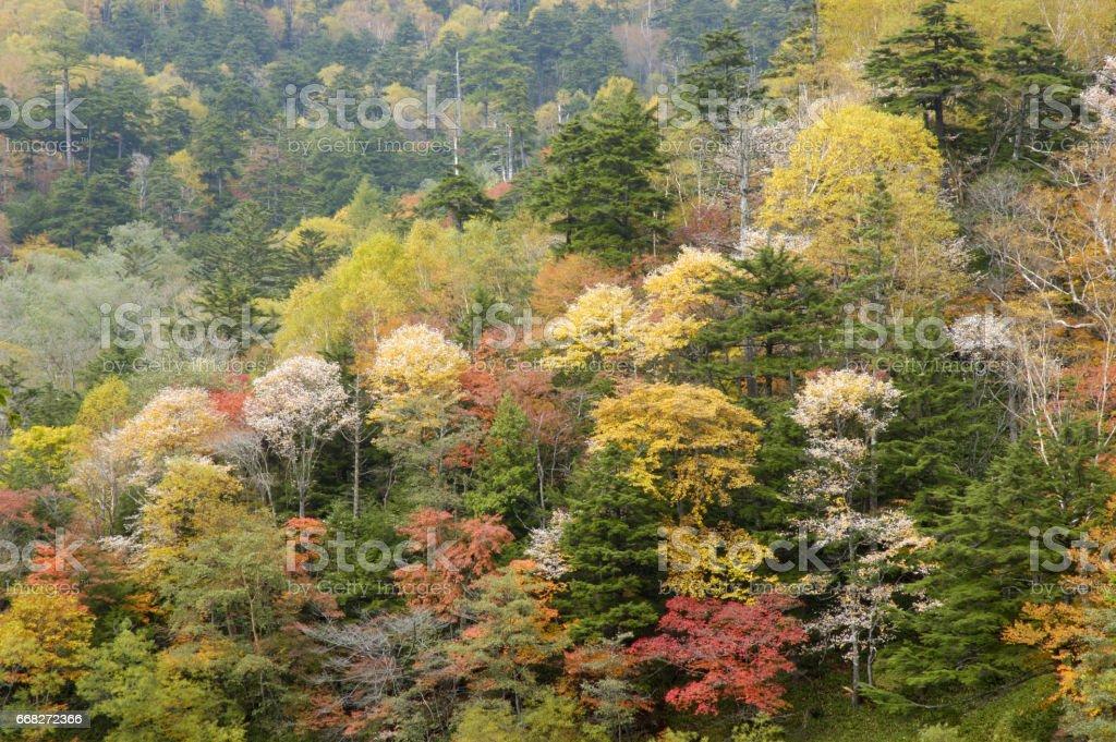 Autumn Woods foto stock royalty-free