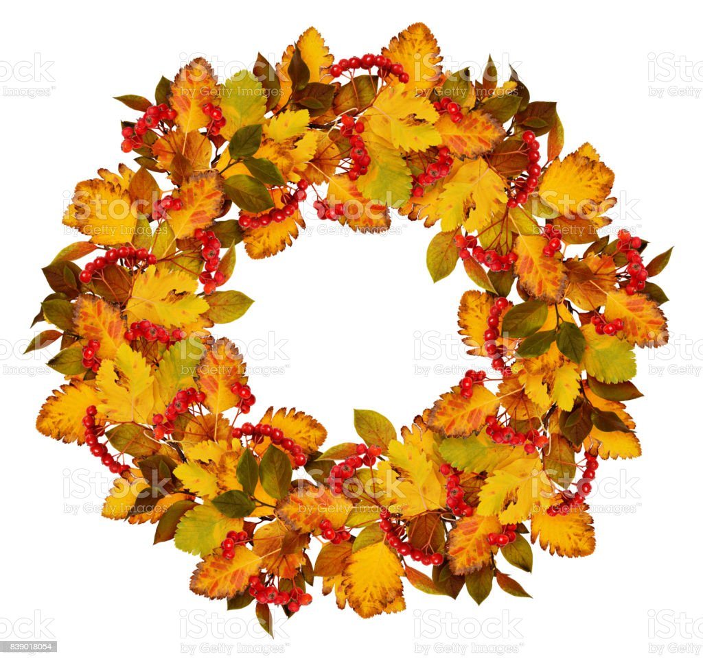 Autumn wreath from dry colored leaves and rowan berries stock photo