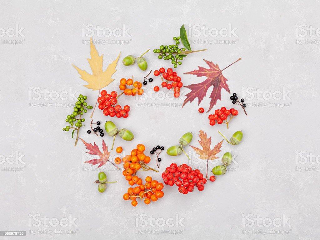 Autumn wreath from leaves, rowan, acorns, flowers, berry. Flat lay. stock photo