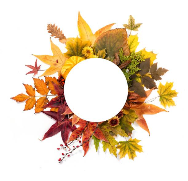 Herbst-Kranz aus Blättern, Beeren, Blumen und Kürbisse – Foto