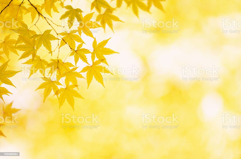 Autumn Yellow Colors stock photo