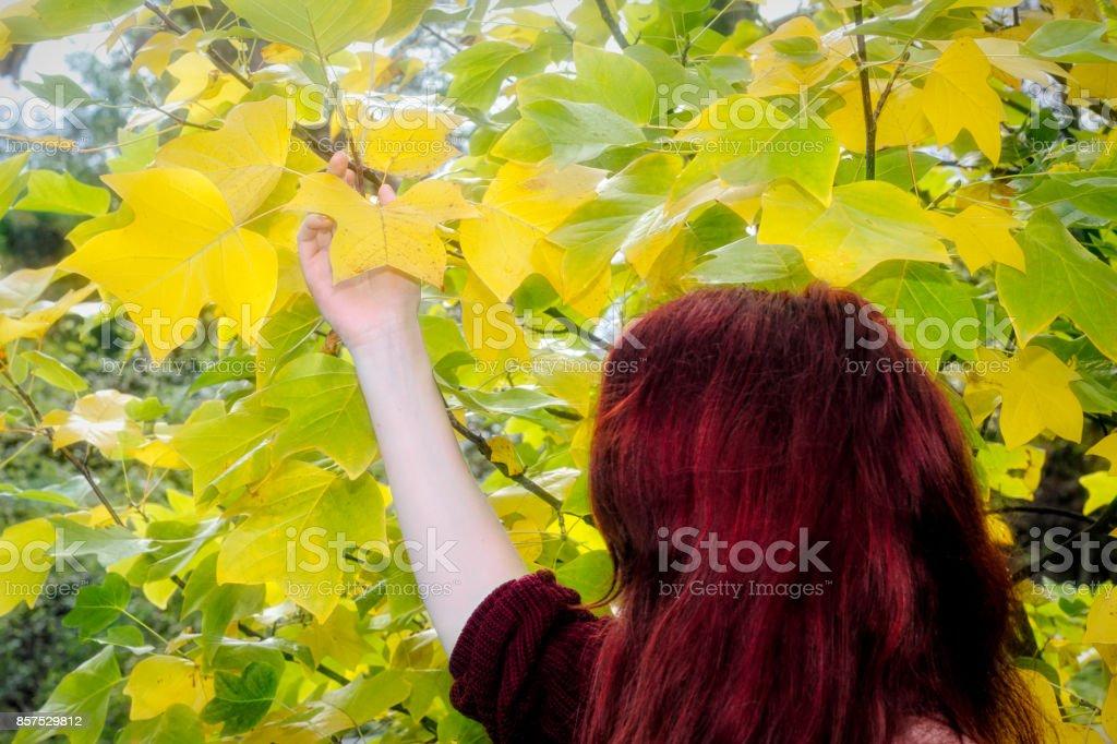 Autumn yellow leaf of tulip tree with autumn outdoor girl redhead stock photo