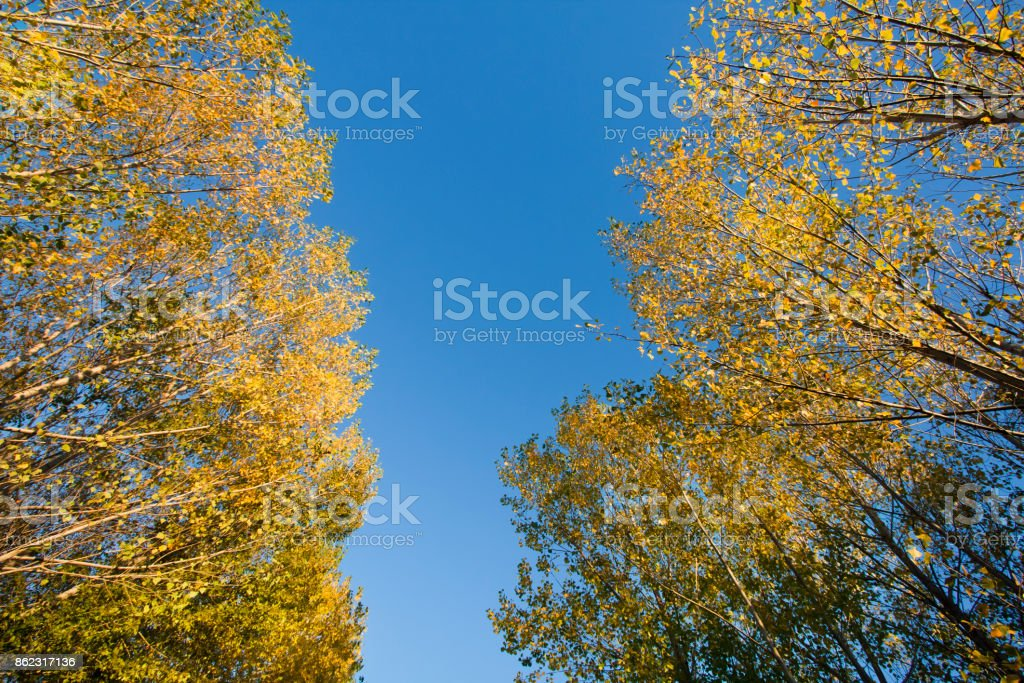 Autumn yellow leaves at both roadsides, blue sky stock photo