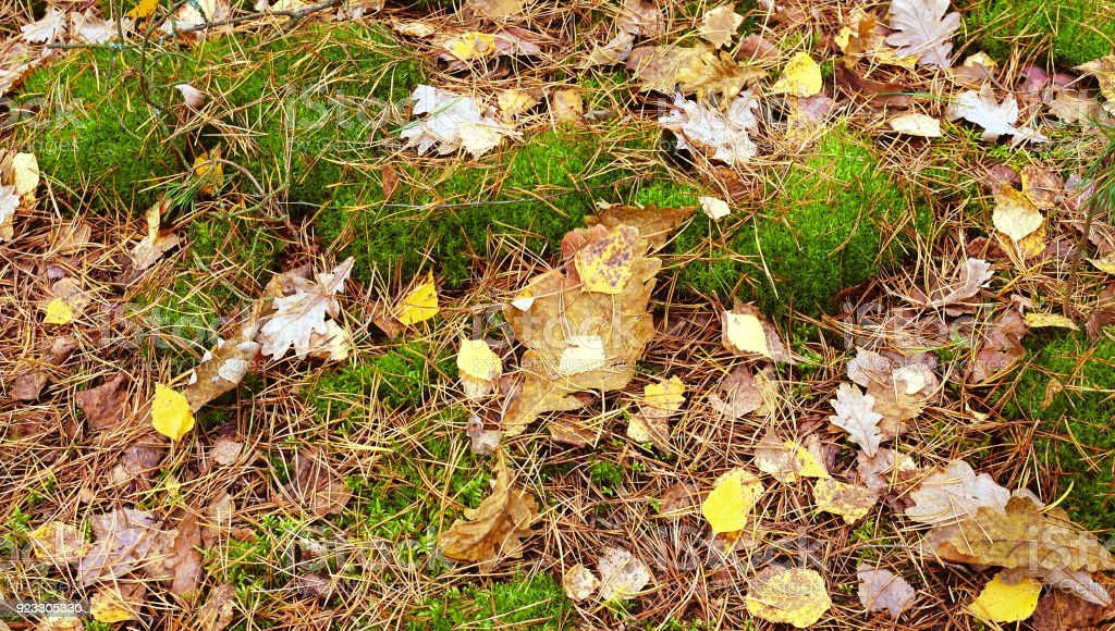 Autumn yellow leaves falling on the ground. stock photo