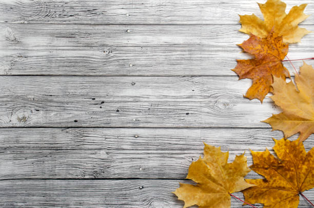 autumn yellow maple leaves on wooden background top view with place for tex autumn yellow maple leaves on wooden background top view with place for tex flat lay table top view stock pictures, royalty-free photos & images