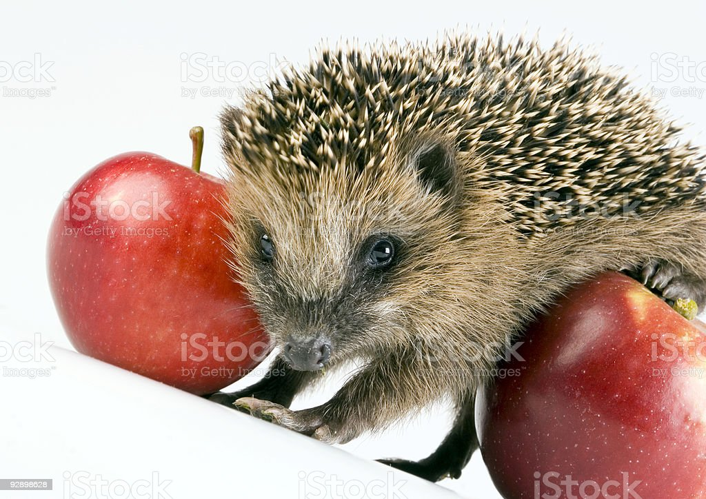 Autumnal animal royalty-free stock photo