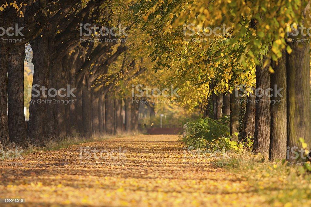 Autumnal avenue royalty-free stock photo