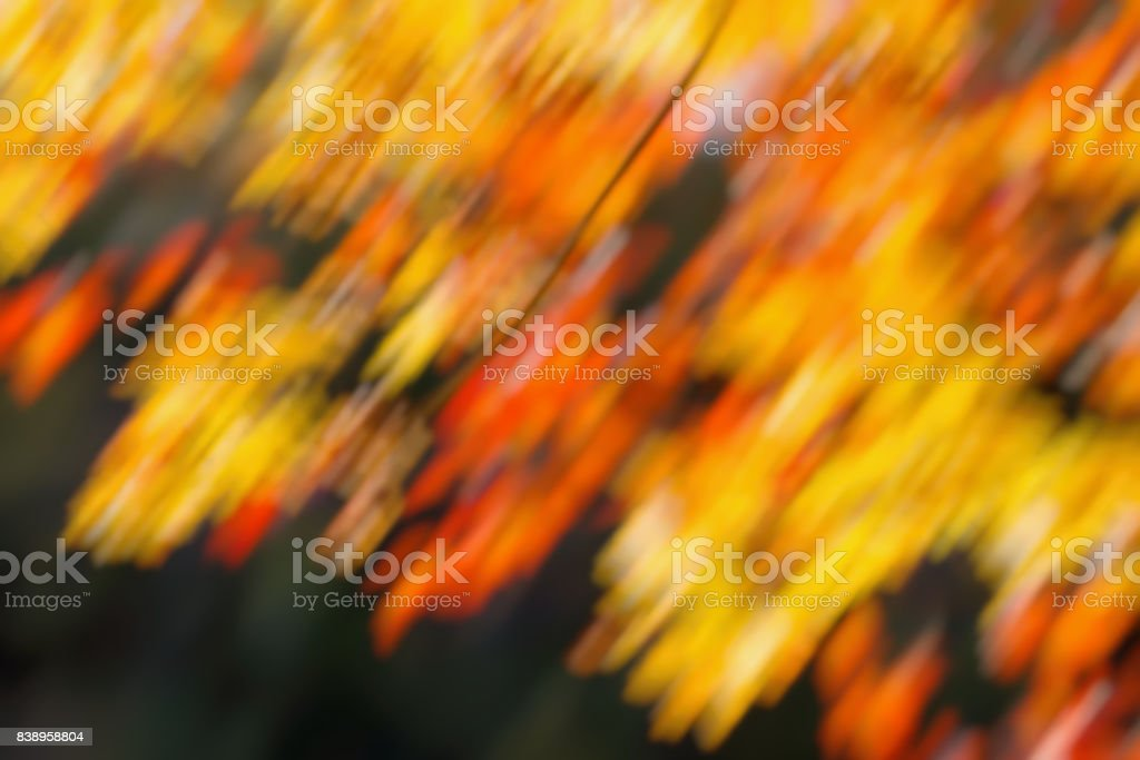 Autumnal Background Natural Blur Golden Bokeh Leaf Wallpaper