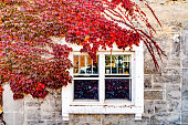 istock Autumnal background 1279059634