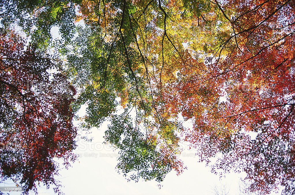 Autumnal background royalty-free stock photo