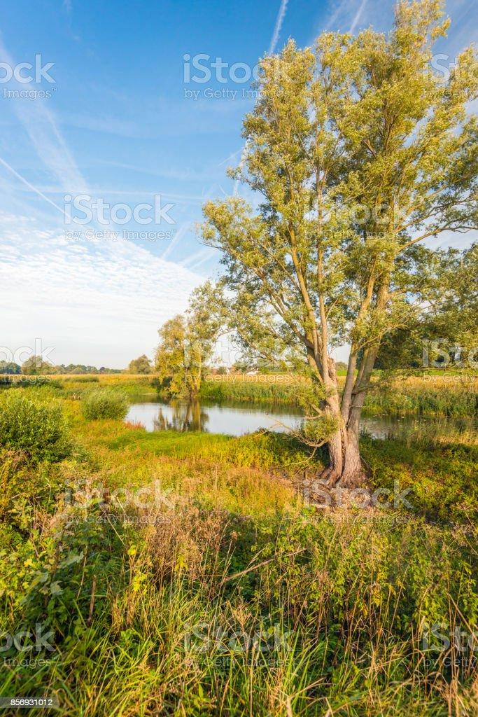 Autumnal colors in a natural Dutch landscape stock photo