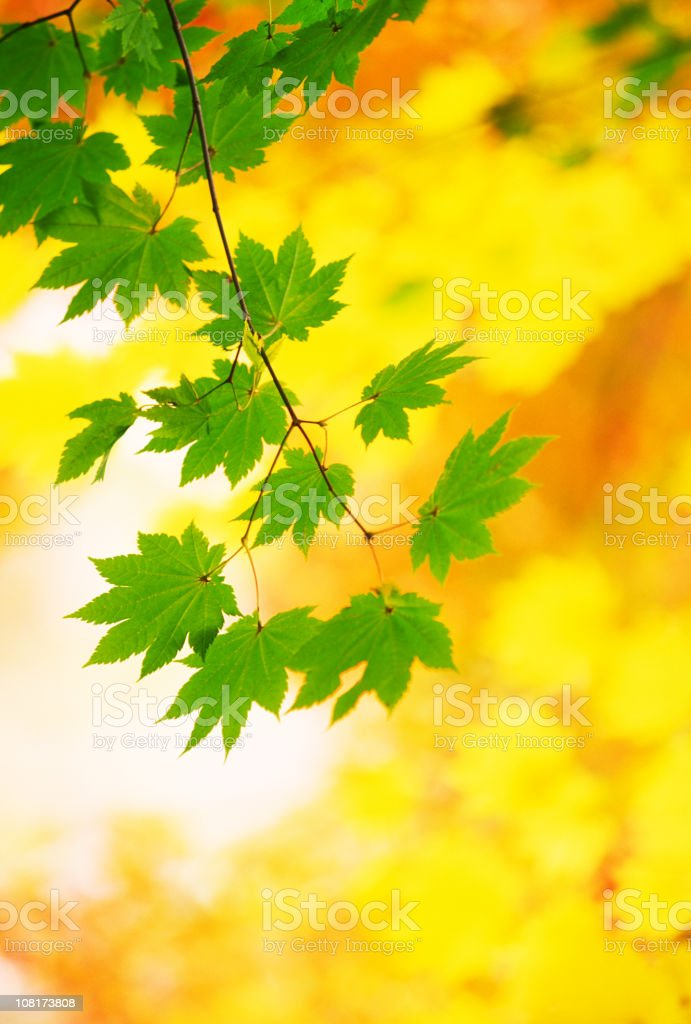 Autumnal colors of leaves royalty-free stock photo
