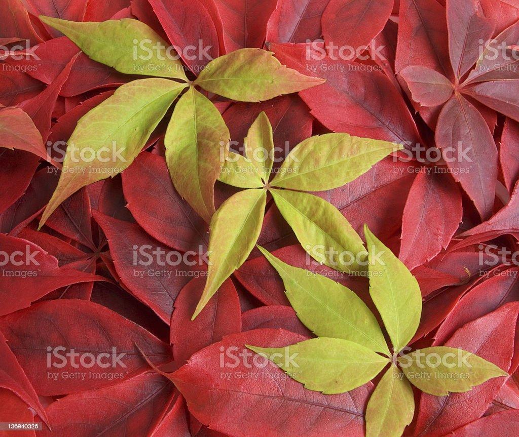 Autumnal Colour royalty-free stock photo