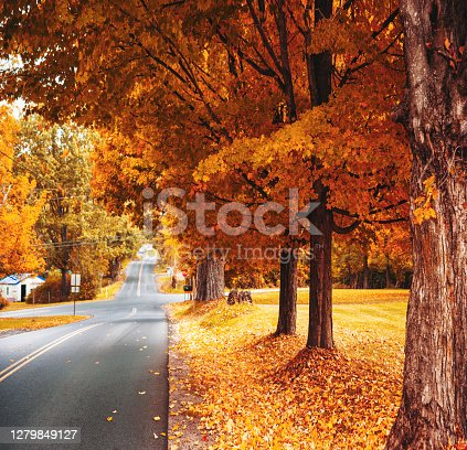 autumnal country road