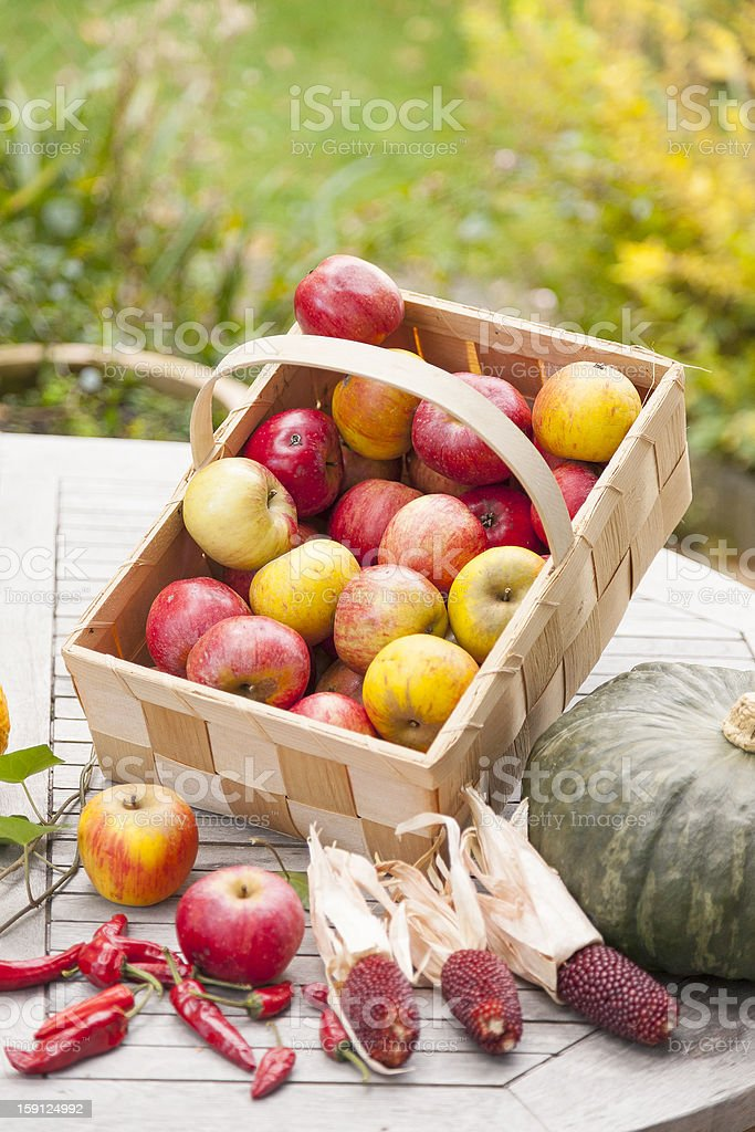 autumnal decorations. royalty-free stock photo