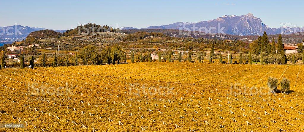 Autumnal Expanse of Vineyards, Italy royalty-free stock photo