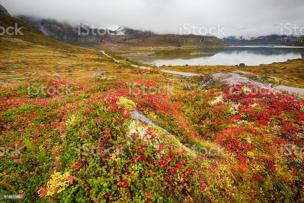 Autumnal Flora and Landscape in Lofoten, Norway stock photo