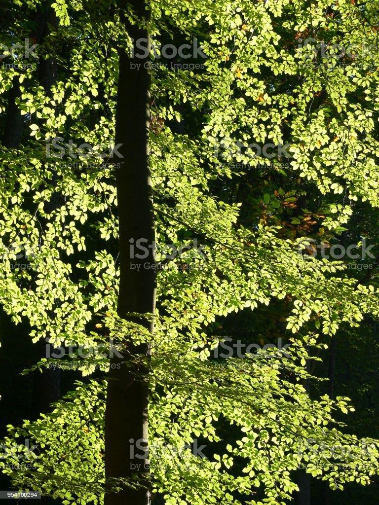 Herbstliches Blattwerk im Gegenlicht stock photo