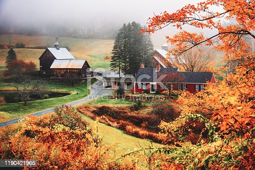 autumnal footpath in autumn