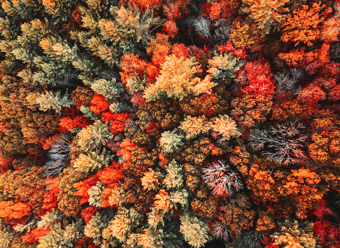 autumnal forest aerial view