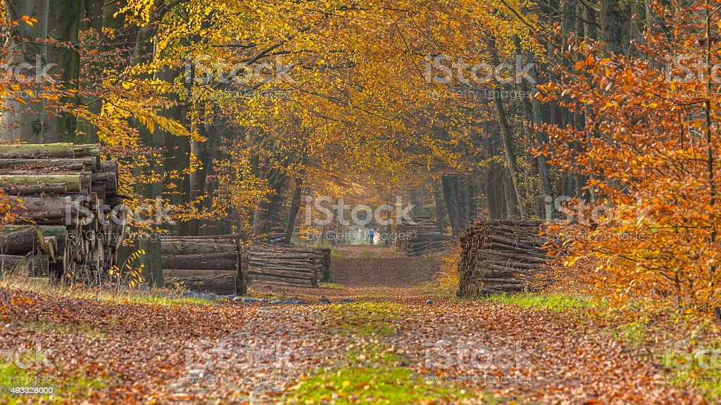 Autumnal forest lane stock photo