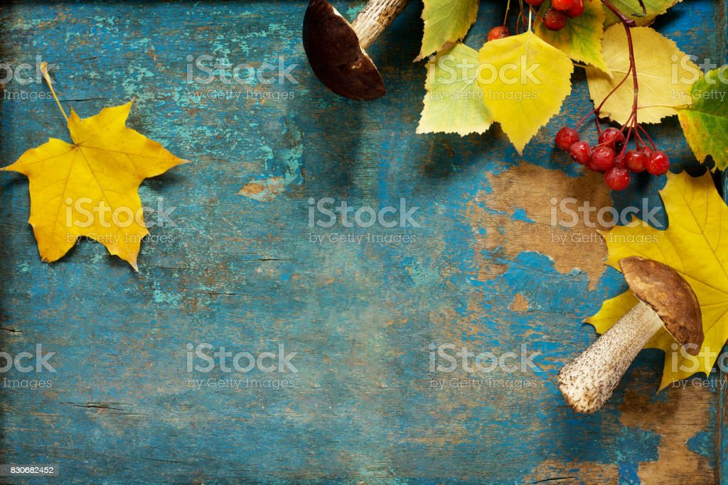 Autumnal frame. Assorted forest mushrooms. Dried mushrooms and autumn leaves. Flat lay, top view. stock photo