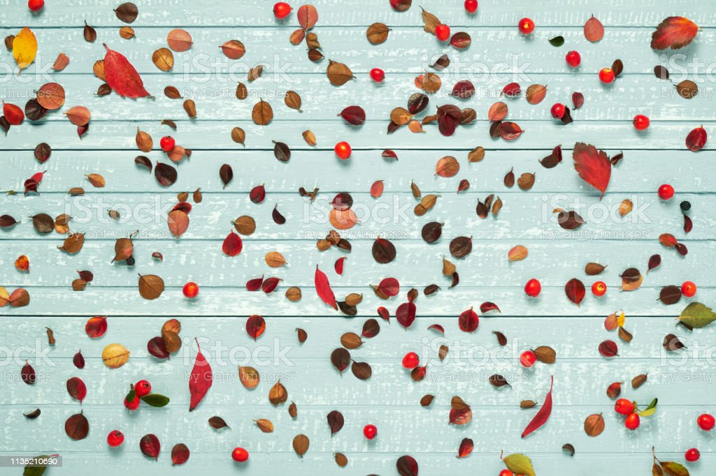 Autumnal frame for your idea and text. Autumn dry twigs with leaves...