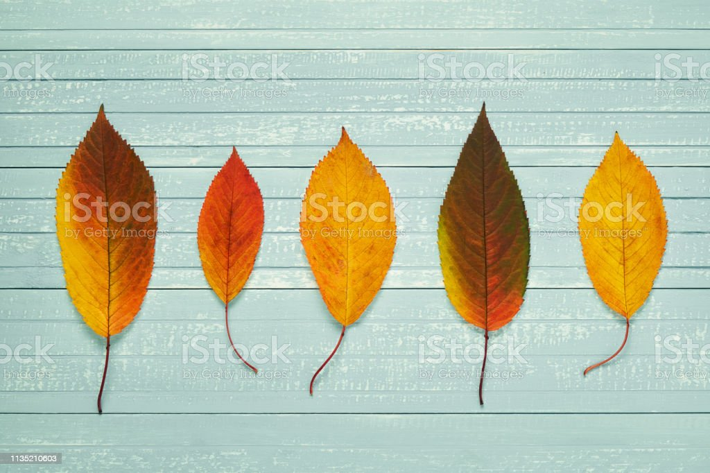 Autumnal frame for your idea and text. In autumn falled dry leaves of...