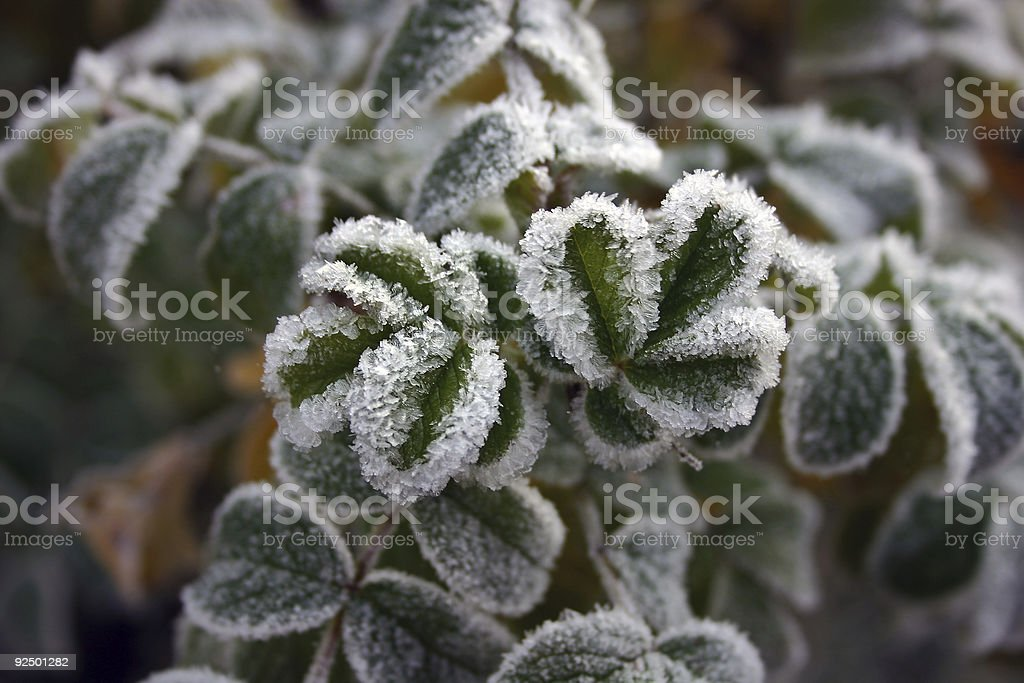 Autumnal frost royalty-free stock photo