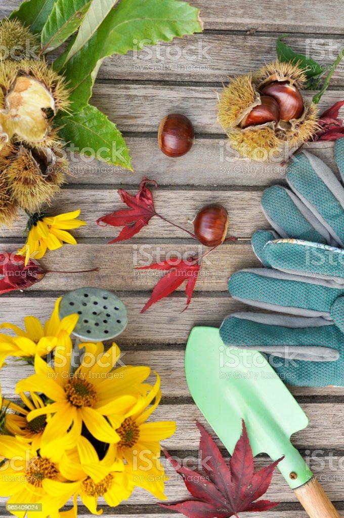 autumnal gardening still life zbiór zdjęć royalty-free