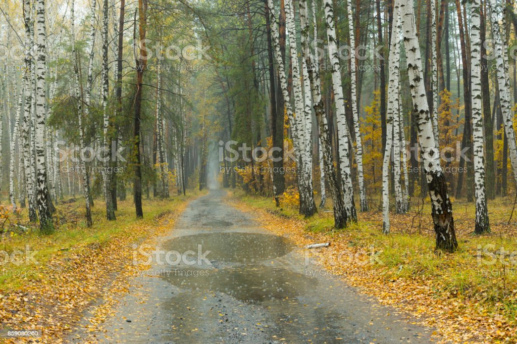 Autumnal landscape at mist and rainy weather in mixed forest