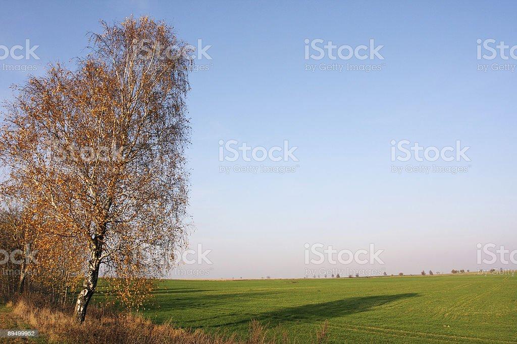 autumnal Krajobraz zbiór zdjęć royalty-free