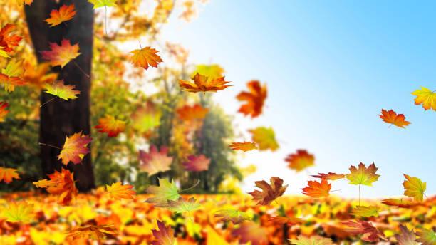 paysage d'automne - couleur des végétaux photos et images de collection