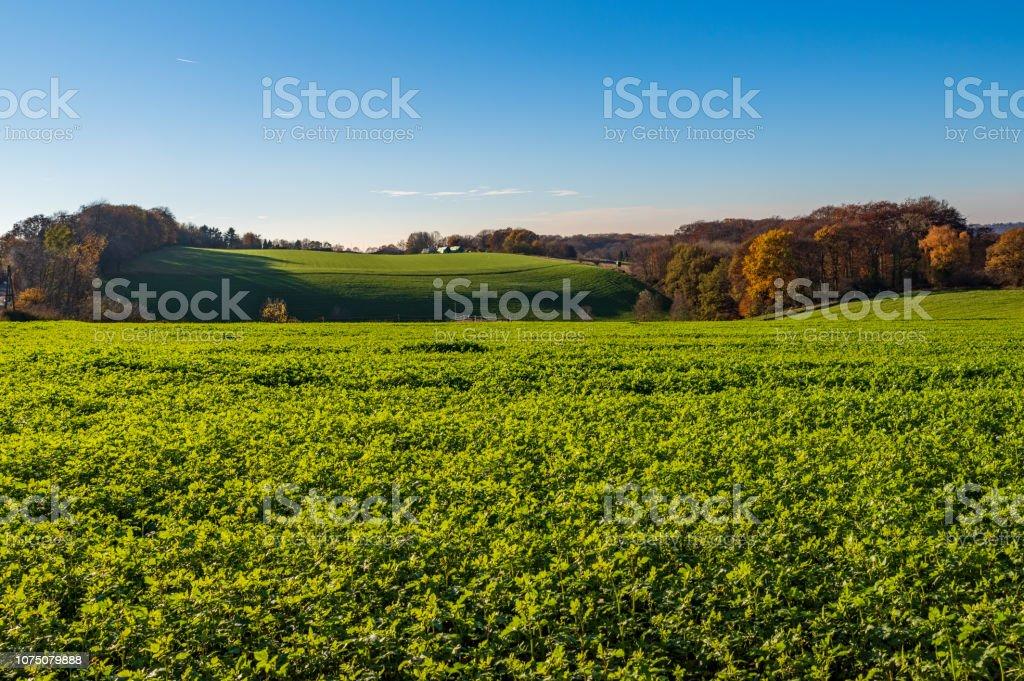 Herbstliche Landschaft, Blick über Wiesen, Felder und Wald – Foto