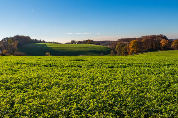 Autumnal landscape, view over meadows, fields and forest Autumnal landscape, view over meadows, fields and forest, Essen, Germany north rhine westphalia stock pictures, royalty-free photos & images